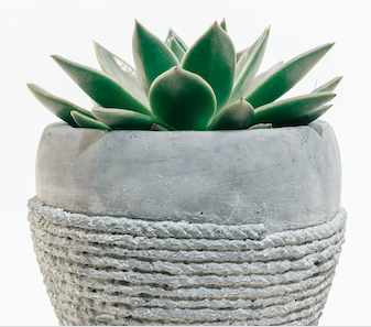 succulent-plant-in-therapist-office.png