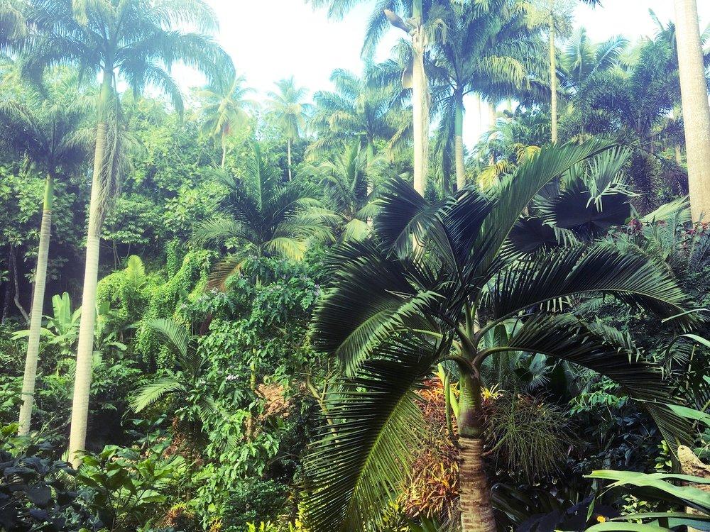 Lush landscape in Central Barbados
