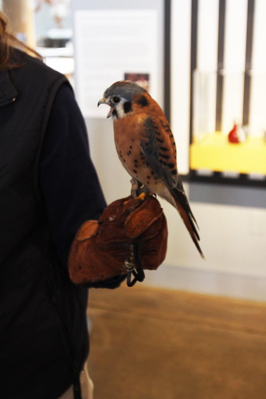 Bird Lovers Weekend_bySerenaBerry_IMG_5282_brightened.jpg