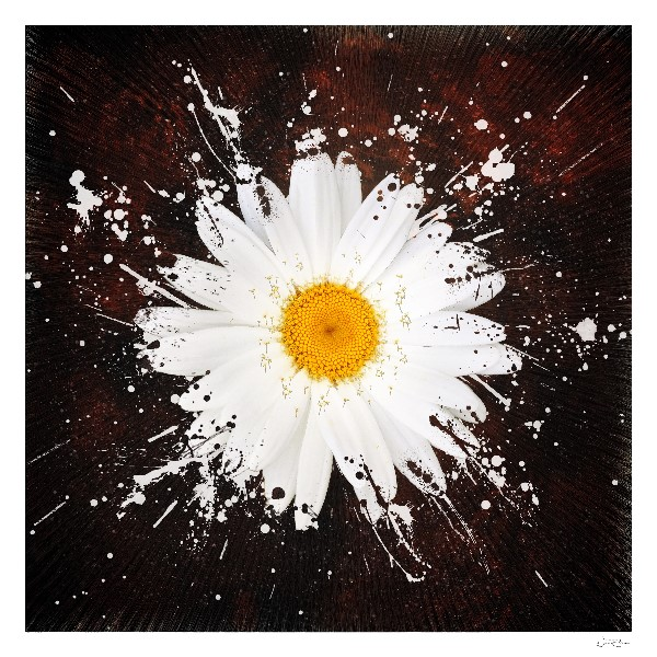Shattered Pain, Flower, Poetry Book