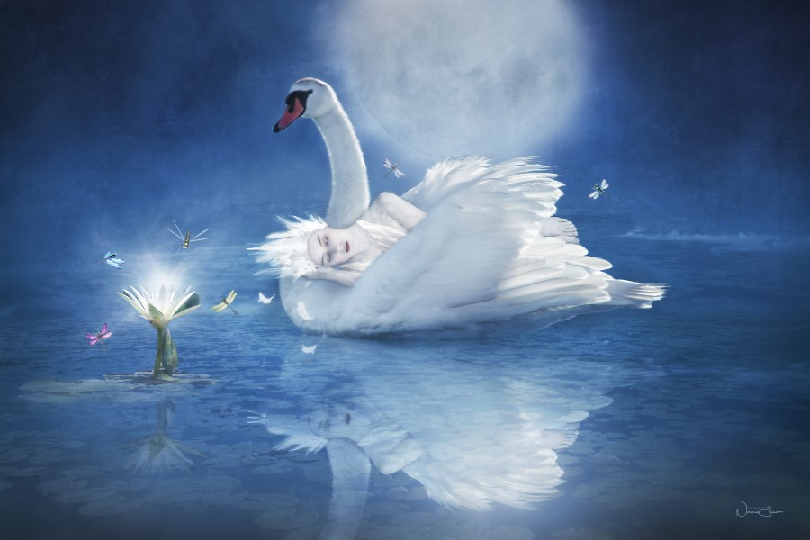 Dreamscape, Swan, Water Lilies, Imagined Land.