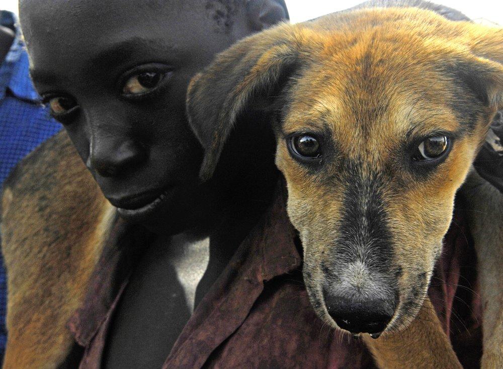 boy-puppy-dog-animal-canine-male-717294-pxhere.com.jpg