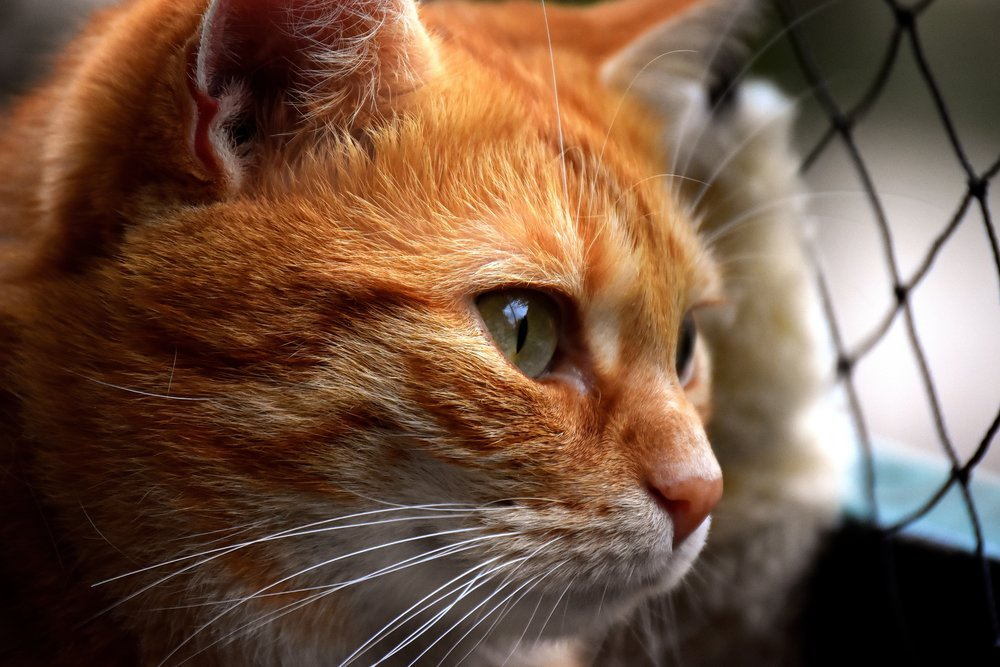 cat-3279064.jpg