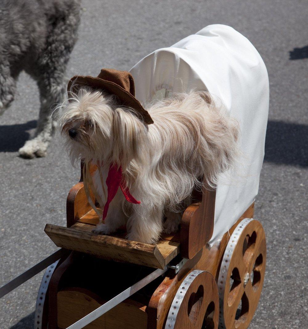 dog-1547114_1920.jpg