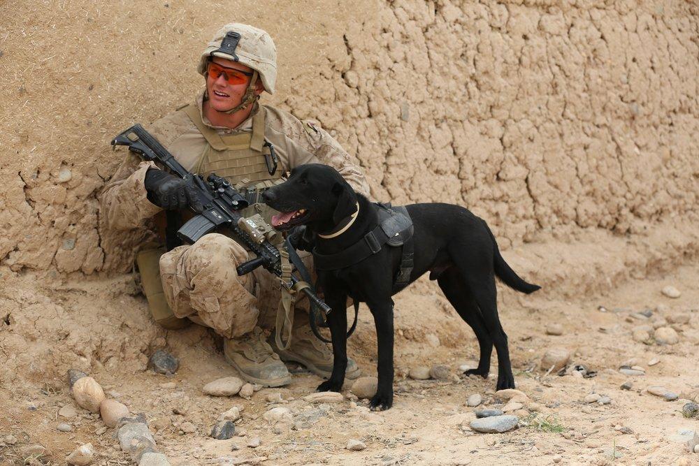 soldier-919179.jpg