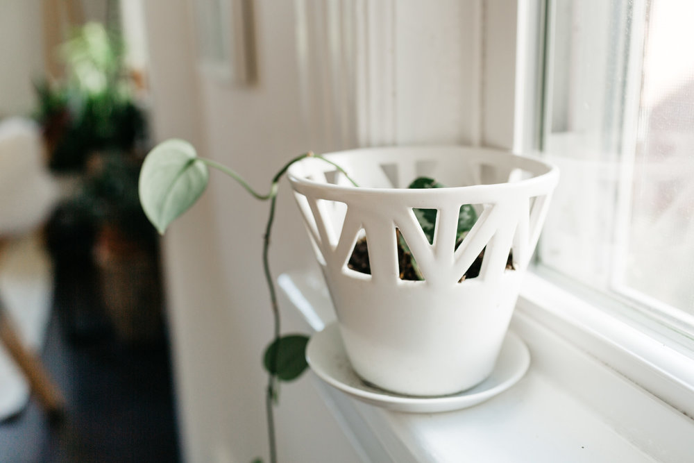 CONVIVIAL -  Small Tabletop Planter  w/ Philodendron