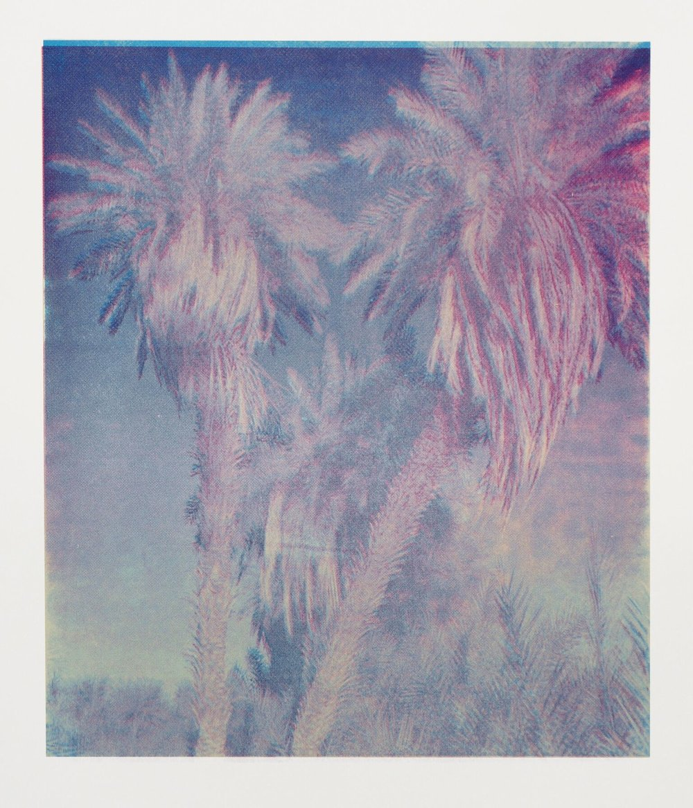 Wolfgang Plöger Palm Trees of Iraq #17