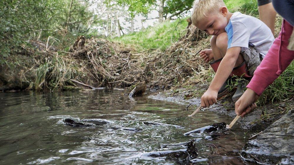 Feeding the eels