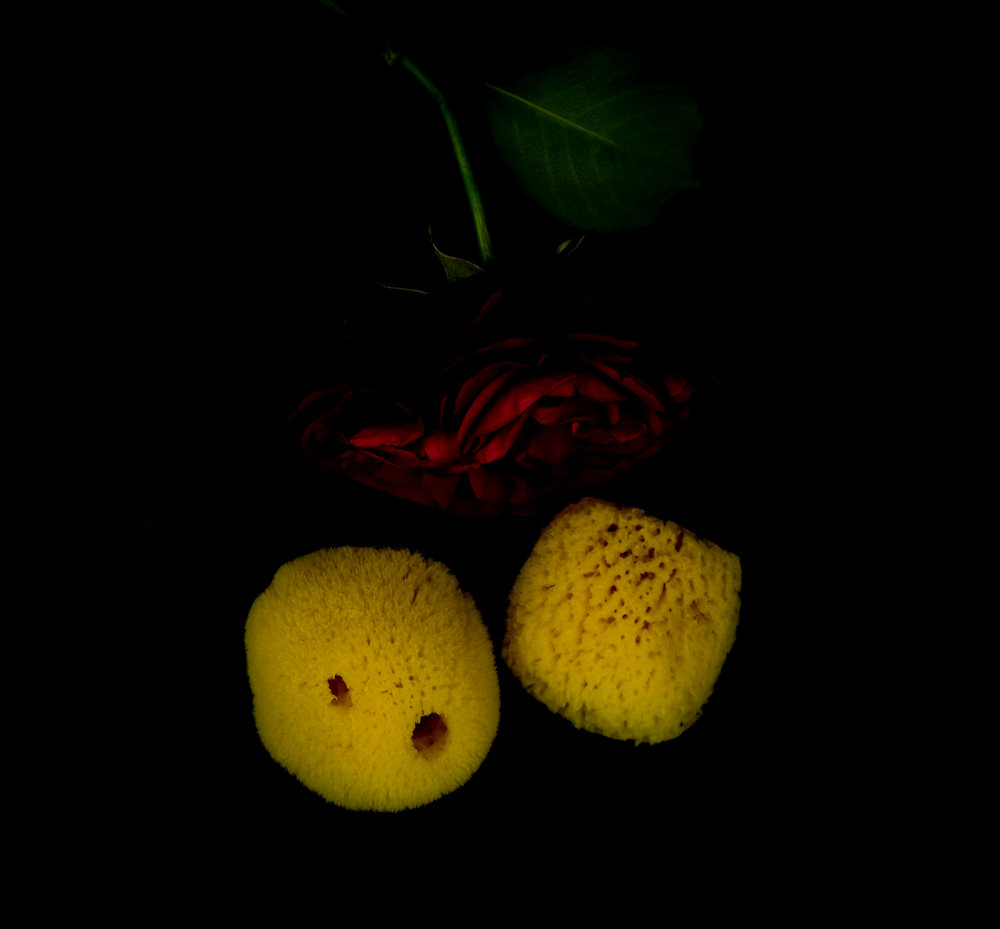 sponges -