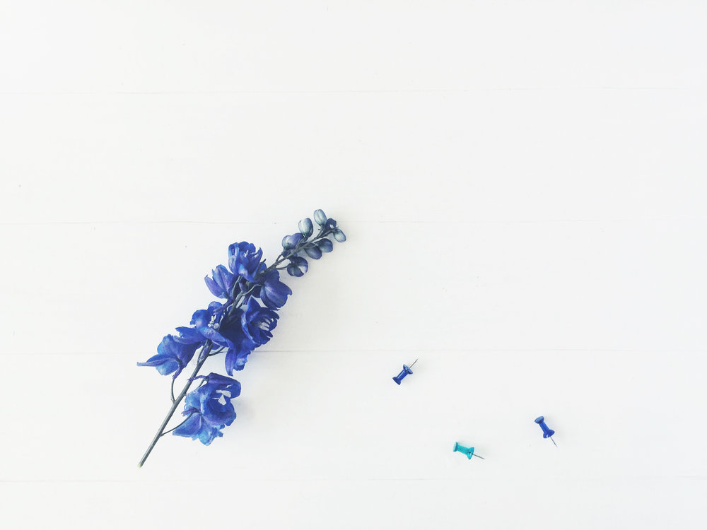 CC_Floral_H1.jpg