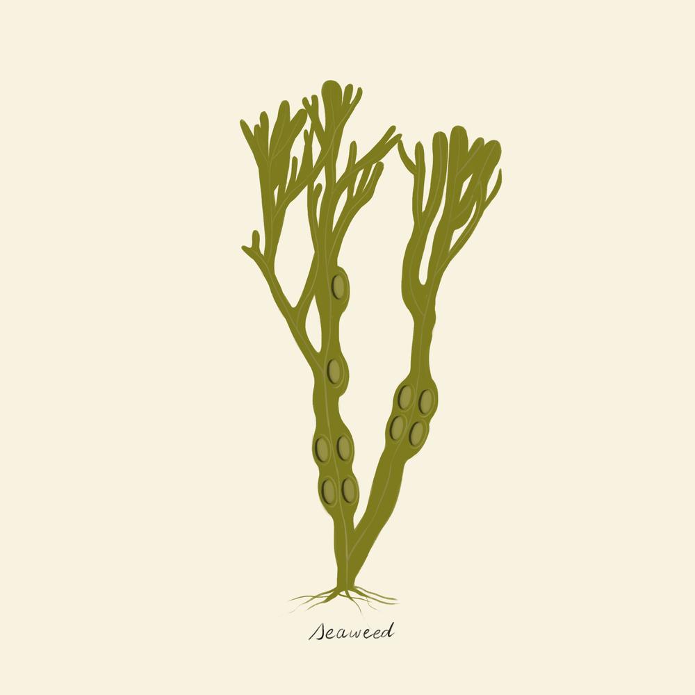 seaweed.png