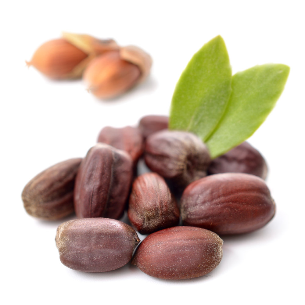 ingredient-jojoba.jpg