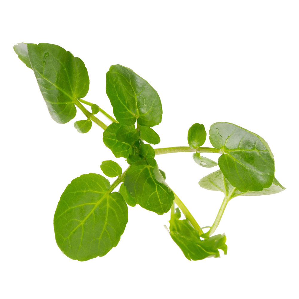 ingredient-watercress.jpg
