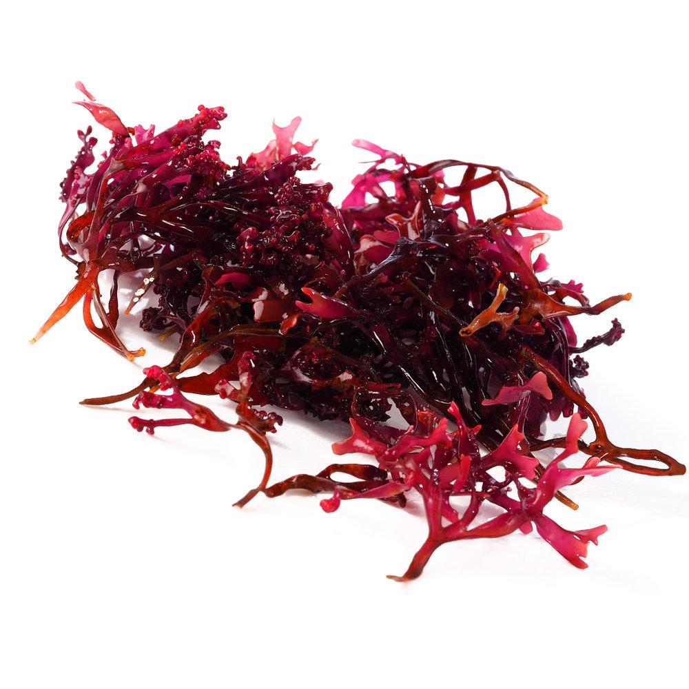 ingredient-red-marine-algae.jpg