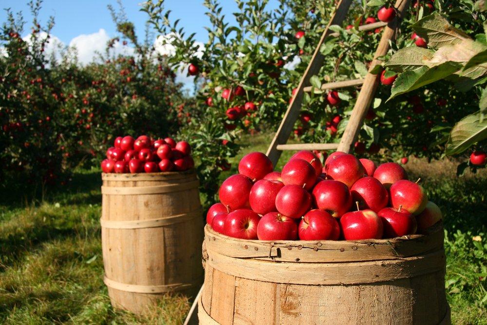 orchard-1872997.jpg