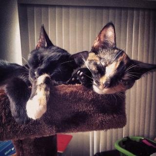 Massimo & Gemma - Winery Felines