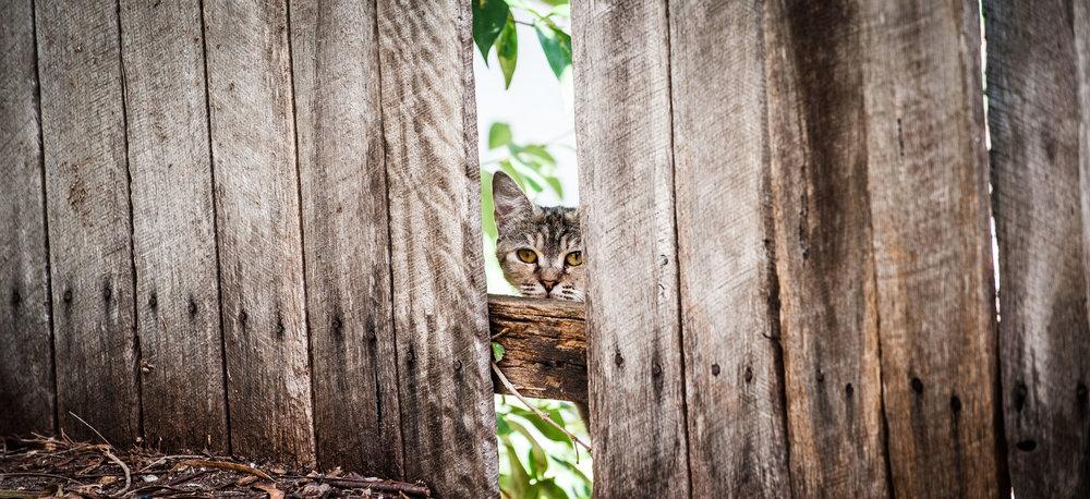 reflective cat.jpg