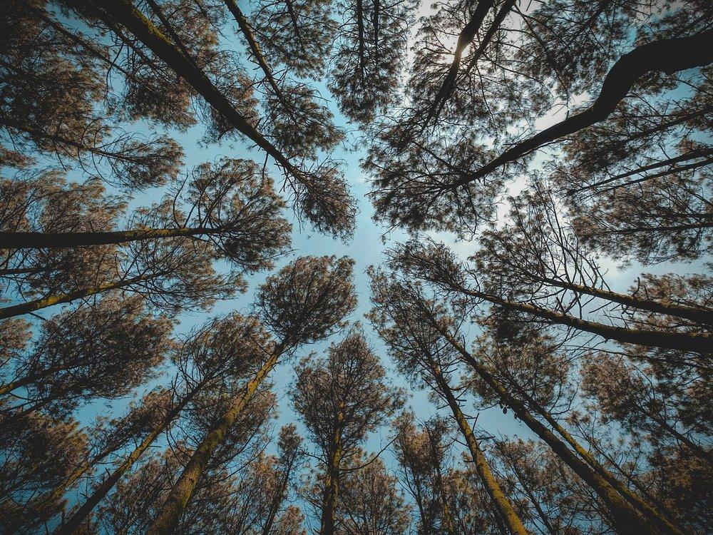blue-blue-sky-branches-851023.jpg
