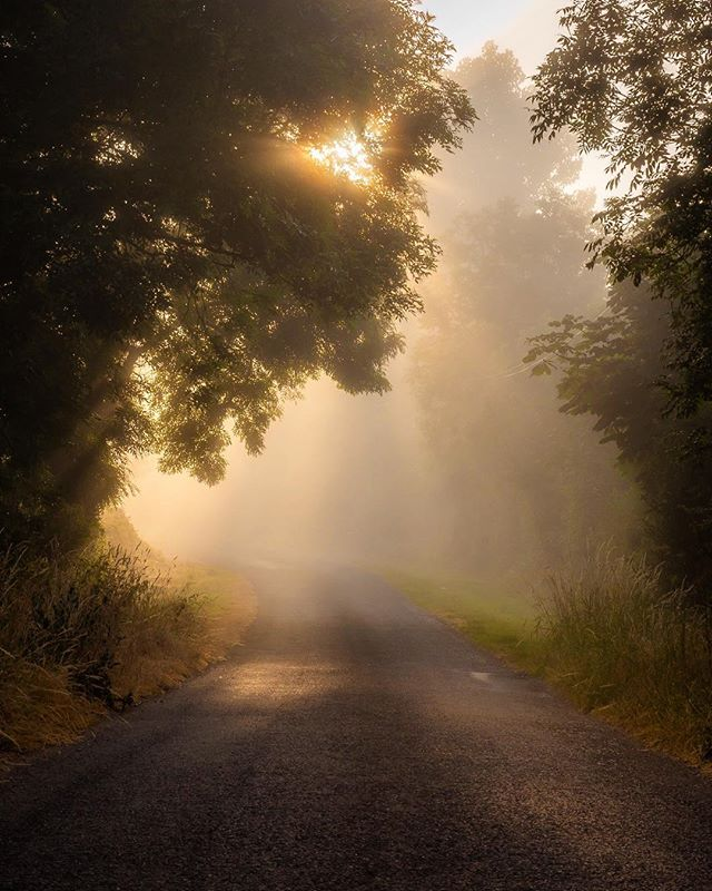 Fog, mist and some golden light . . Came across this scene purely by chance the other morning on my way home from Kinsale. A small backroad at the foot of the ballyhoura mountains was just shrouded in fog, i waited for the sun to come through and this was the result . . Olympus EM1 MK2 Mzuiko 12-40 F2.8 Pro . . #raw_ireland  #sky_painters  #lovinireland  #thefullirish_  #loves_ireland  #global_hotshotz  #splendid_shotz  #inspireland  #enchantedireland  #sunrise_madness  #magic_shots  #bestirelandpics  #rteweathercomp  #tree_shotz  #tree_perfection  #tree_brilliance  #nature_brilliance  #fiftyshades_of_nature_  #LOVES_TREES_RURAL  #tgif_sunrise  #artofvisuals  #earthshotz  #earth_shotz  #bestirelandpics  #microfournerds  #microfourthirds  #microfourthirdsastrophotography  #ireland_gram  #ig_ireland  #ig_worldclub #duffypics