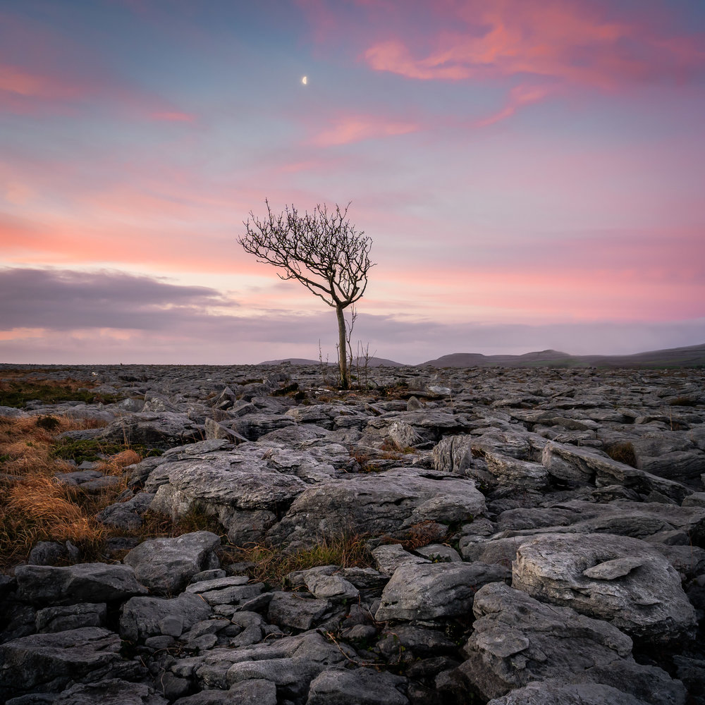 'The Fairy Tree' A pink sunrise in The Burren, Co Clare