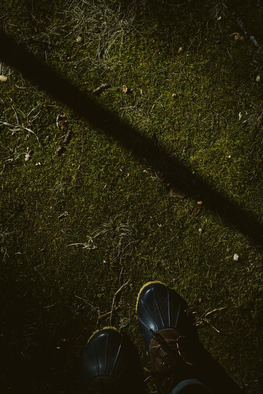woods-17.jpg