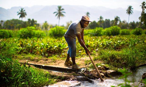Haiti farmer working the land.Photograph: A F Cortes
