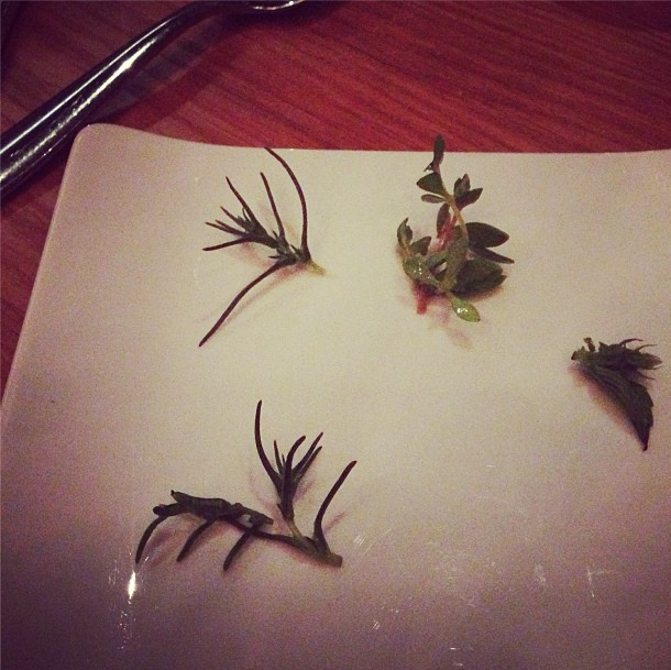 theelm_herbs.png