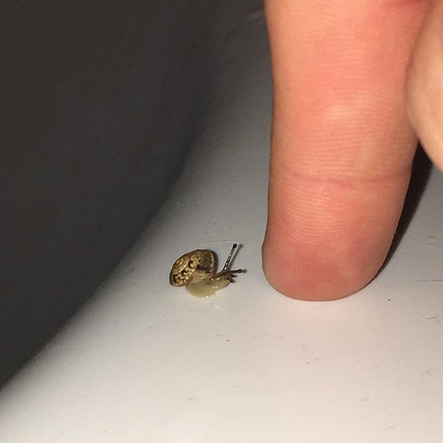 Hello, child 🐌  Doth my giant finger intrigueth thou?