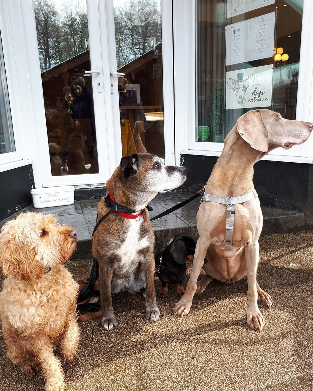 """""""Quick Mum - We want to go in here. They sell sausages just for us dogs!"""""""