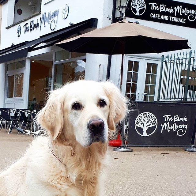 We have received a photo of the lovely Lexie who came in to see us! Very glad to hear she liked the treats - and that her owners enjoyed the cake😊