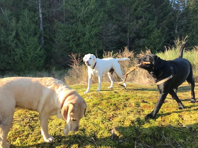 tracks-countryside-doggie-daycare.jpg