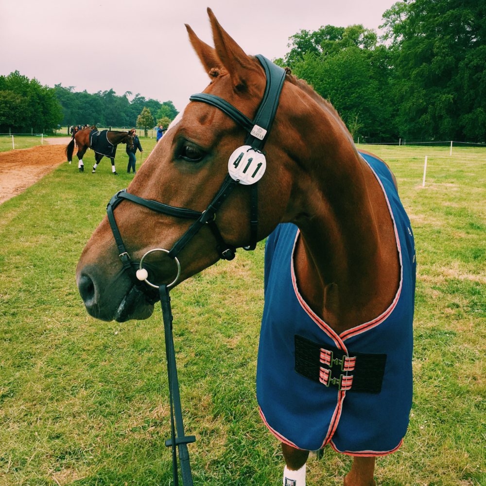 - DoB 2010Height 16h3Sire: IrokoDam: BackhanderGrade: (2019) CCI3*/CC14* - S (old CI/CIC***)