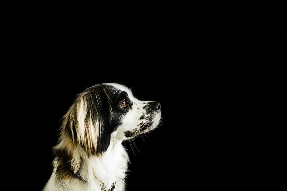 pet photography, portland oregon