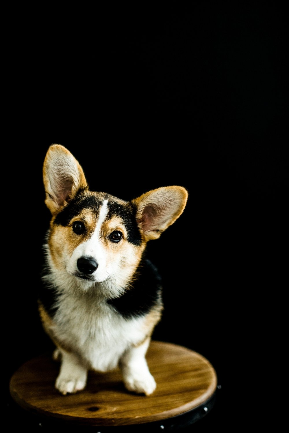 Portland, Oregon Pet Photography