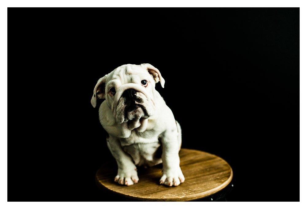 Pet Photography in Portland, Oregon Sommessa_2681.jpg