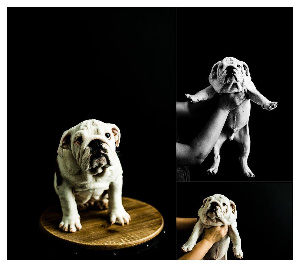 Pet Photography in Portland, Oregon Sommessa_2682.jpg