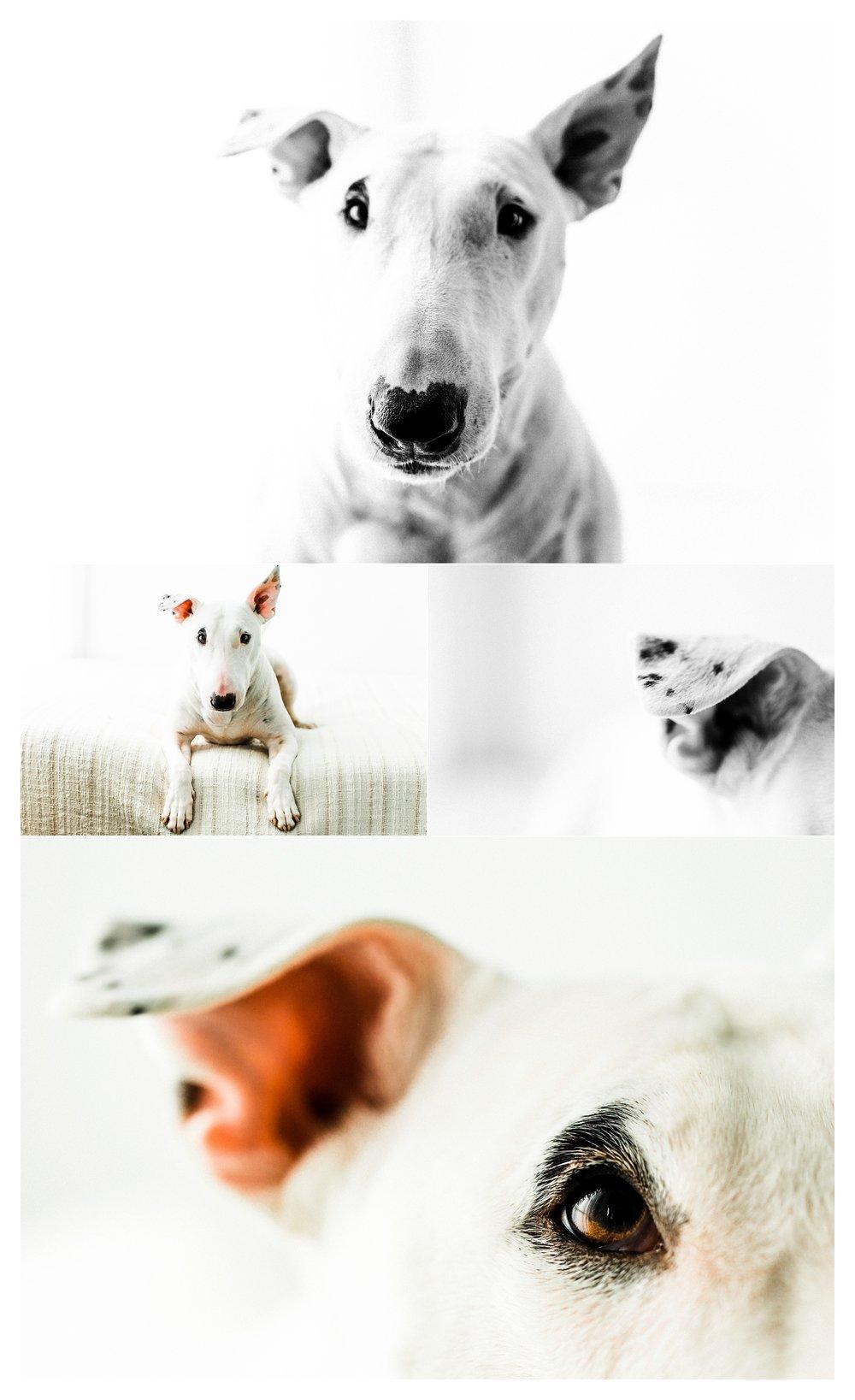 Pet Photography in Portland, Oregon Sommessa_2684.jpg