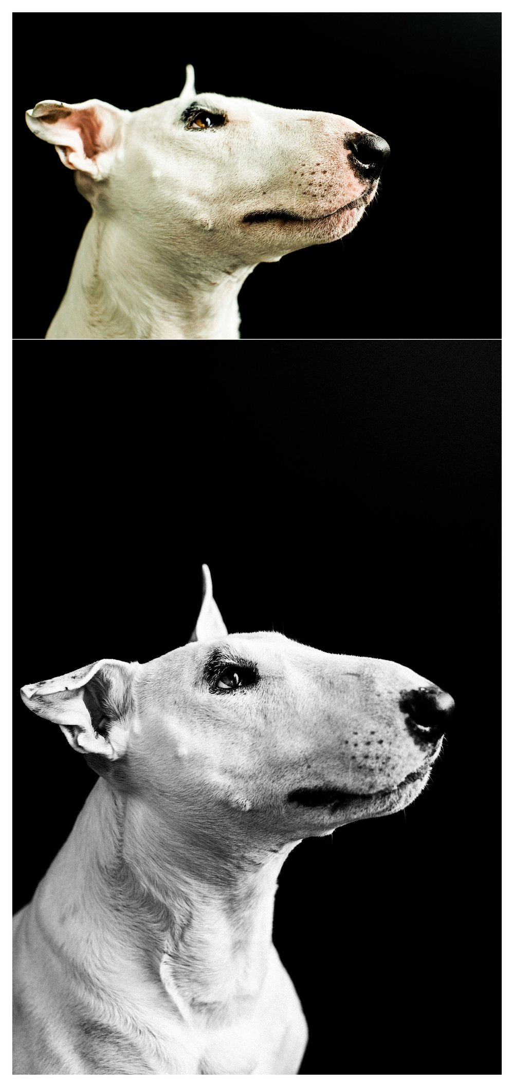 Pet Photography in Portland, Oregon Sommessa_2686.jpg