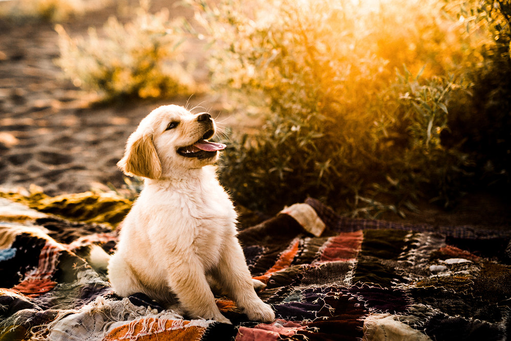 portland, oregon pet photographer