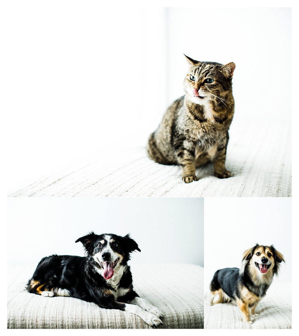 Pet Photography in Portland, Oregon Sommessa_2688.jpg