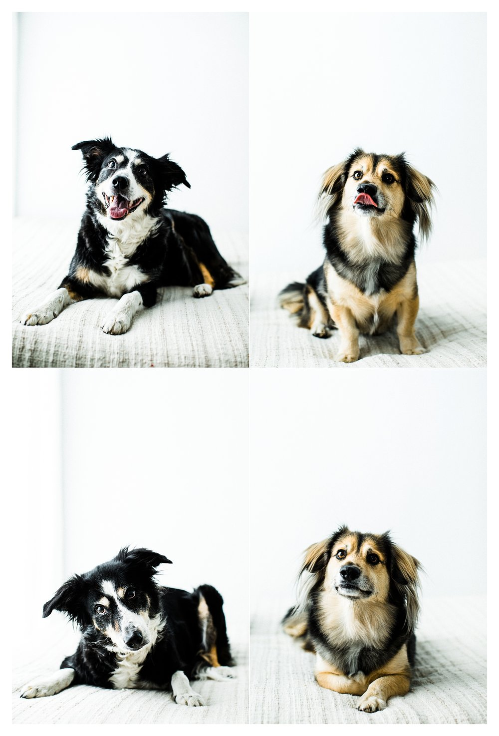 Pet Photography in Portland, Oregon Sommessa_2687.jpg
