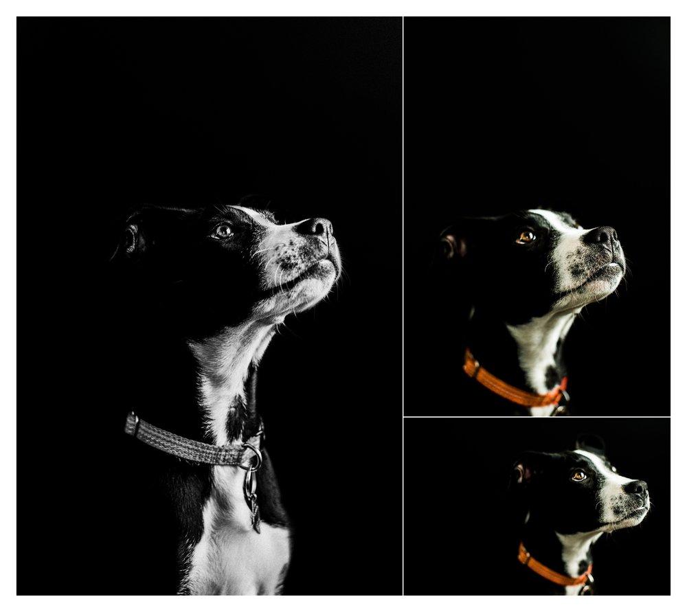 Pet Photography in Portland, Oregon Sommessa_2695.jpg
