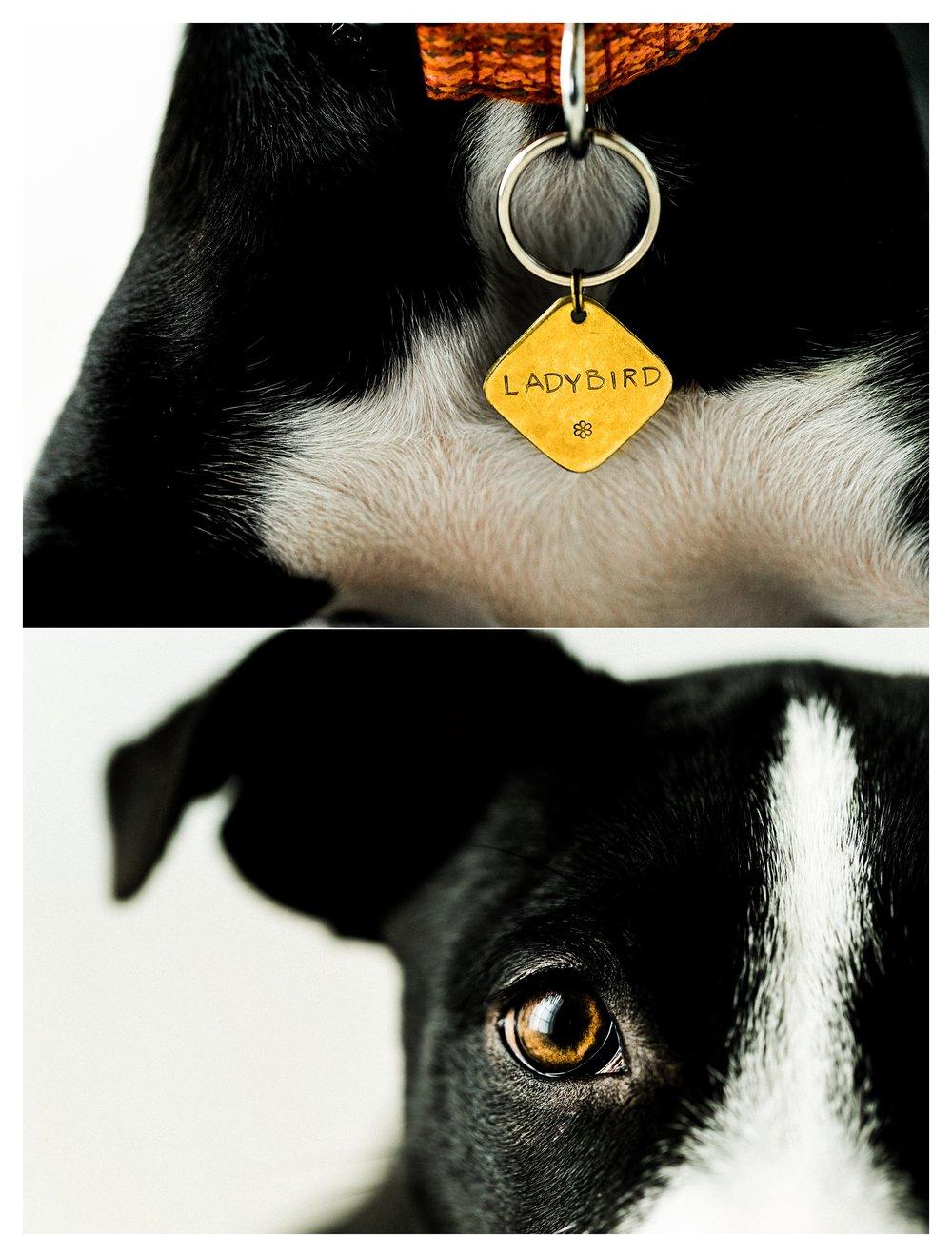 Pet Photography in Portland, Oregon Sommessa_2694.jpg