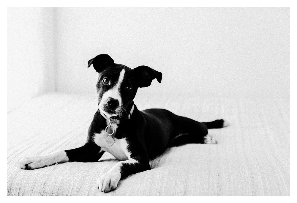 Pet Photography in Portland, Oregon Sommessa_2692.jpg