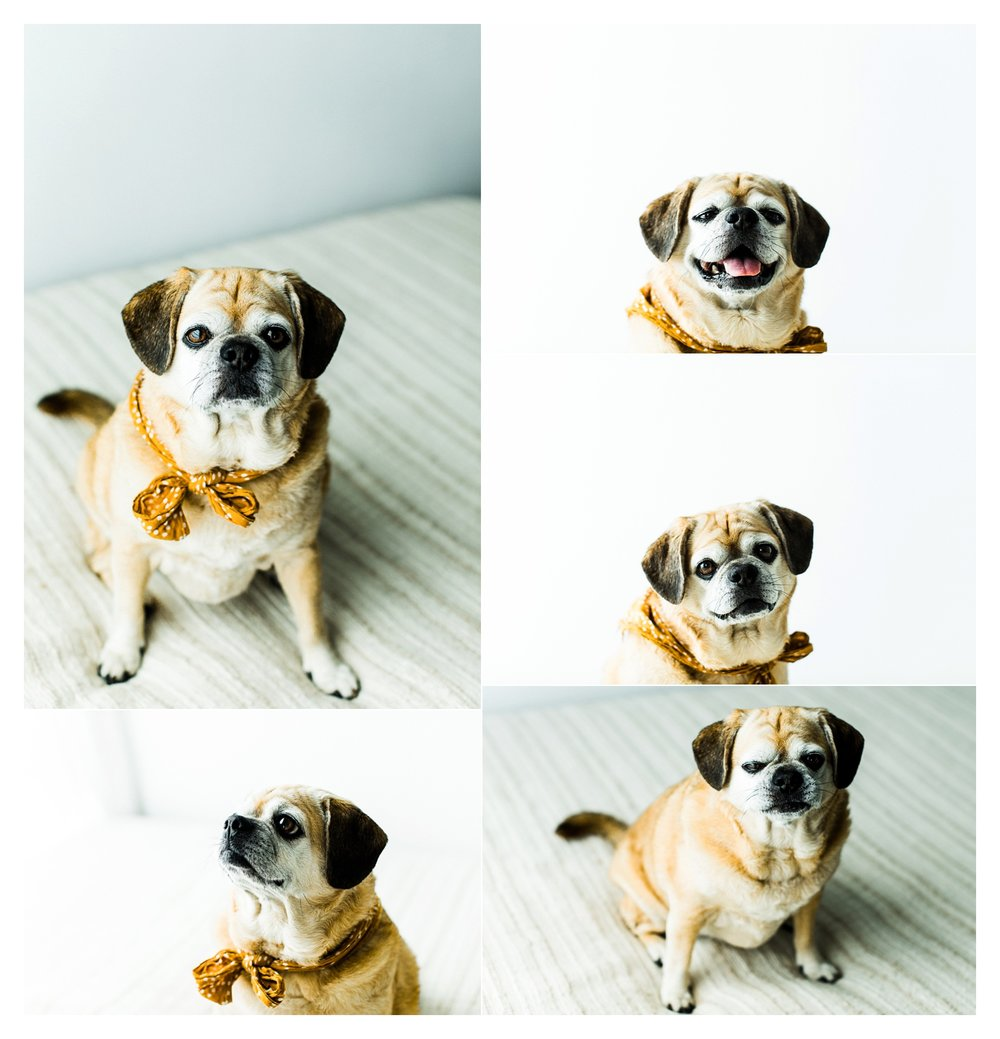 Pet Photography in Portland, Oregon Sommessa_2698.jpg