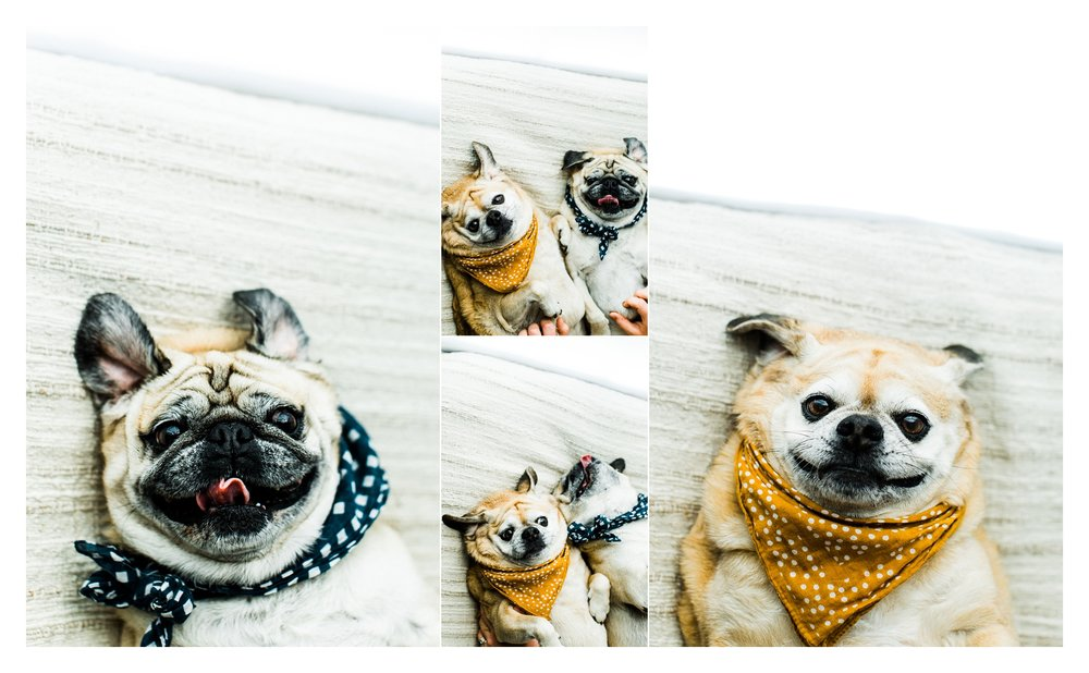 Pet Photography in Portland, Oregon Sommessa_2704.jpg