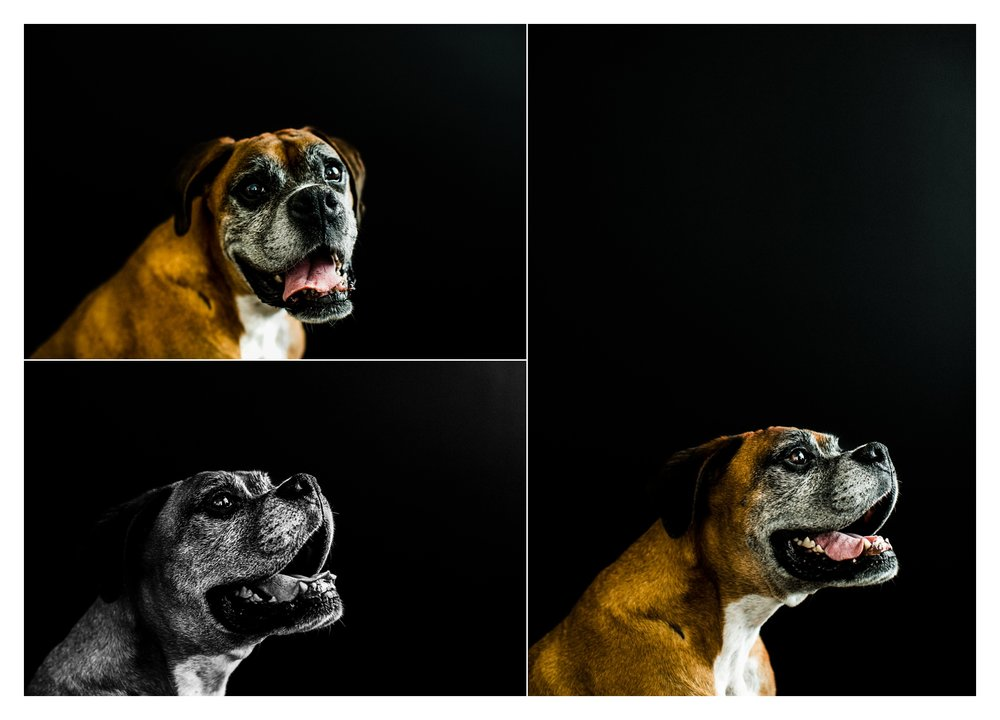 Pet Photography in Portland, Oregon Sommessa_2710.jpg