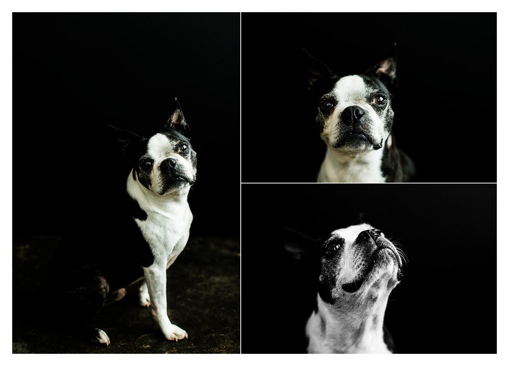Pet Photography in Portland, Oregon Sommessa_2709.jpg