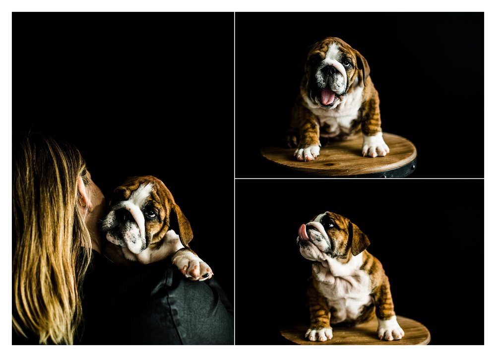 Pet Photography in Portland, Oregon Sommessa_2720.jpg