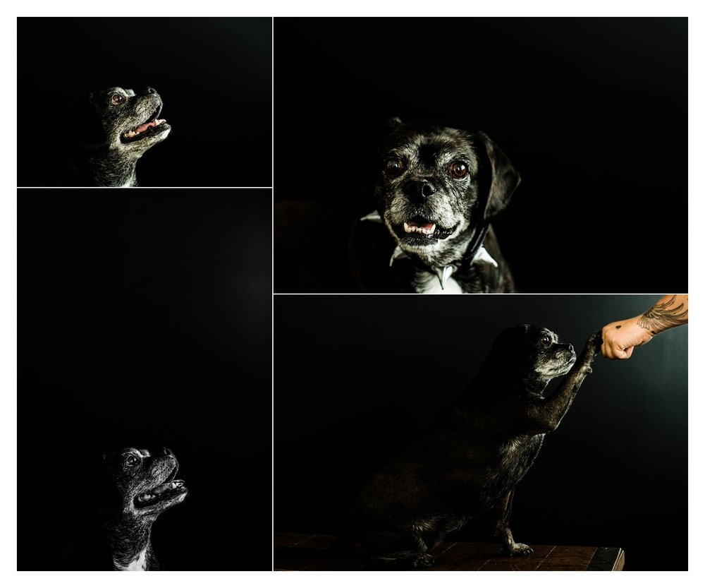 Pet Photography in Portland, Oregon Sommessa_2728.jpg